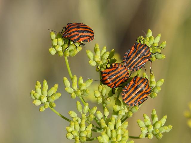 Beetles, Bugs, Reproduction, Couple, Insects, Striped