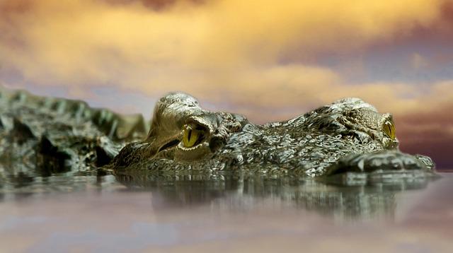 Crocodile, Animal, Nature, Reptile, Alligator