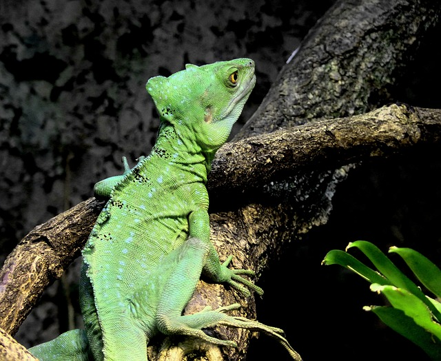 Chameleon, Green, Reptile, Animal, Insect Eater, Head