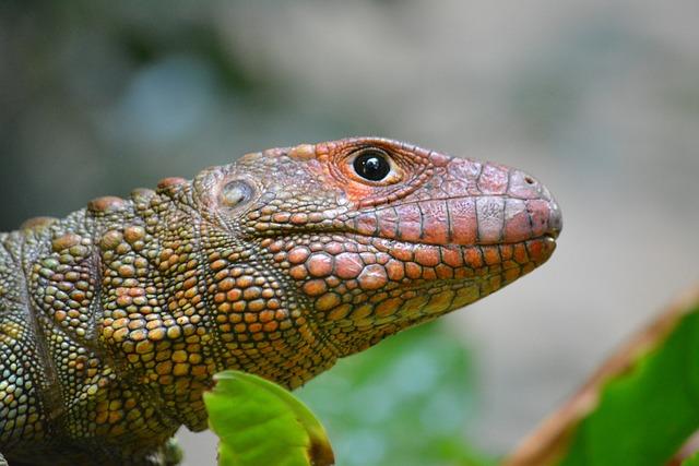 Lizard, Reptile, Nature, Animal World, Animal, Tropical