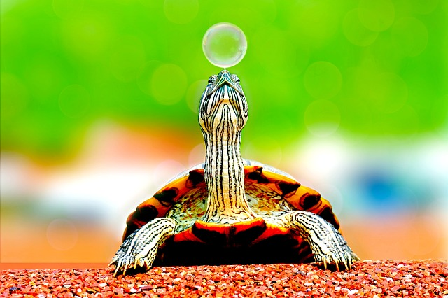 Animal, Turtle, Bubble, Cute, Macro, Reptile