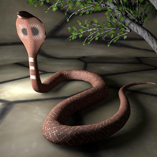 Snake, Reptile, Animal, Species, Cobra, Close