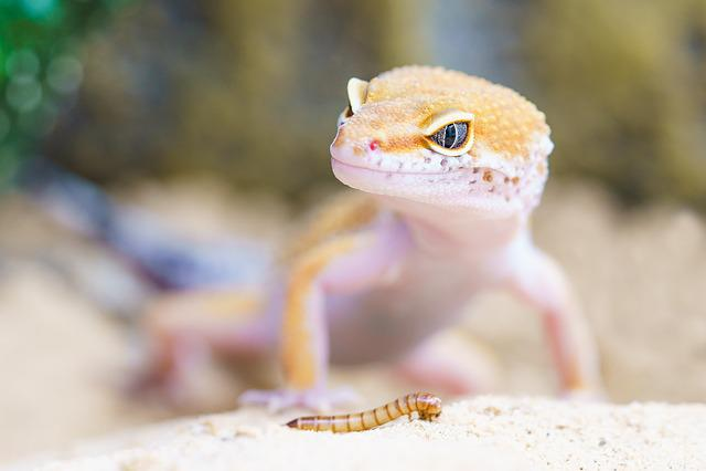 Gecko, Reptile, Terrarium, Lizard, Scale, Macro