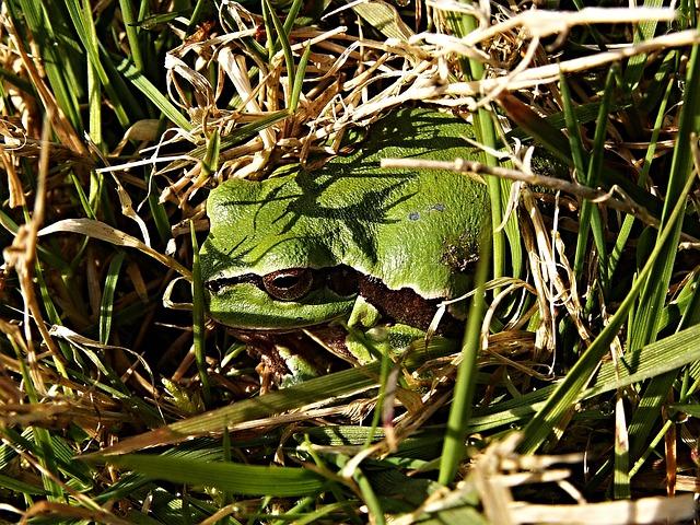 Tree-frog, Tree, Frog, Macro, Green, Reptile