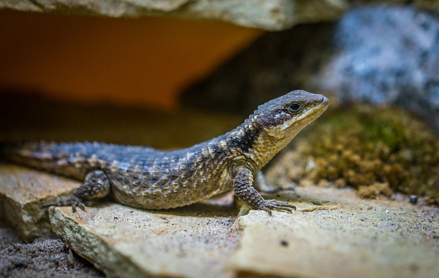 Nature, Lizard, Living Nature, Reptile