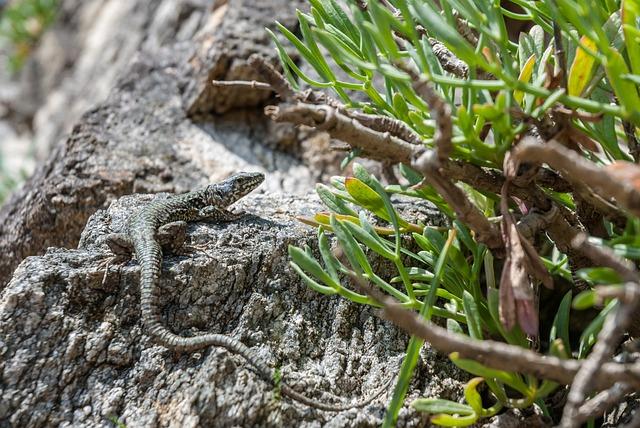 Lizard, Reptile, Animal, Nature, Green, Green Lizard