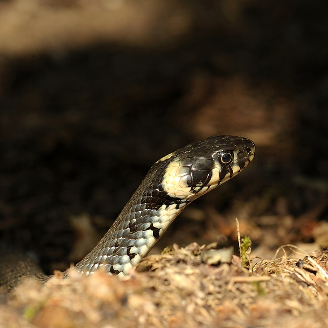 Reptile, Snake, Animal World, Nature, Animal