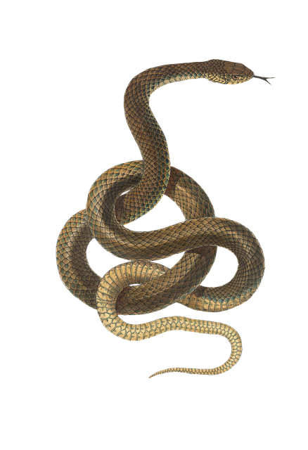 Snake, Reptile, Animal, Vintage, Isolated, Png