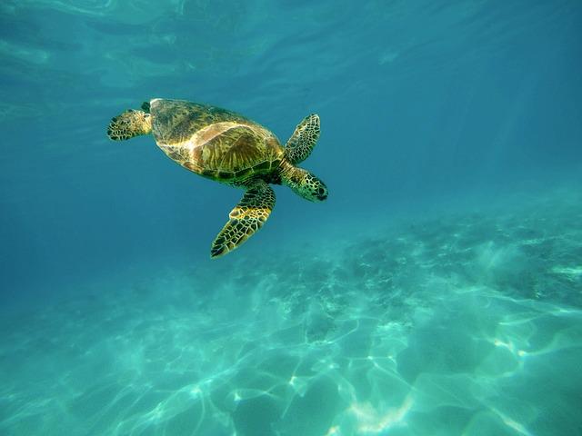 Sea Turtle, Turtle, Underwater, Swimming, Reptile