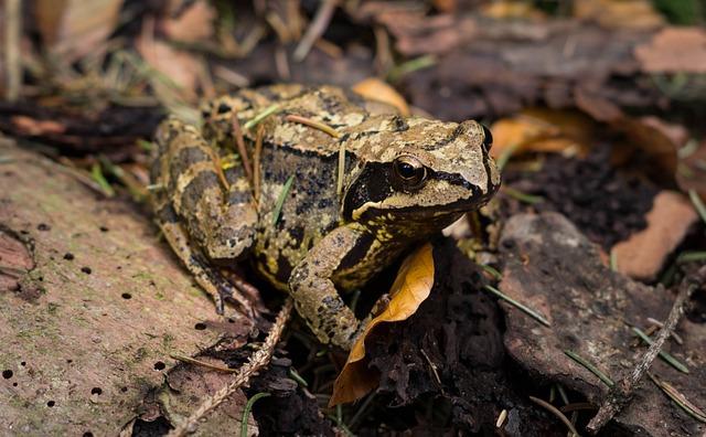 Nature, Wildlife, Animal, Amphibian, Reptile