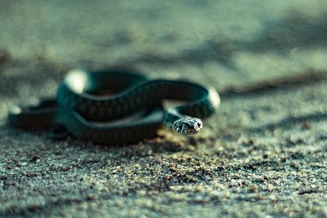 Nature, Animals, Reptiles