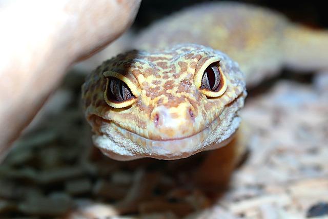 Reptiles, Nature, Animals