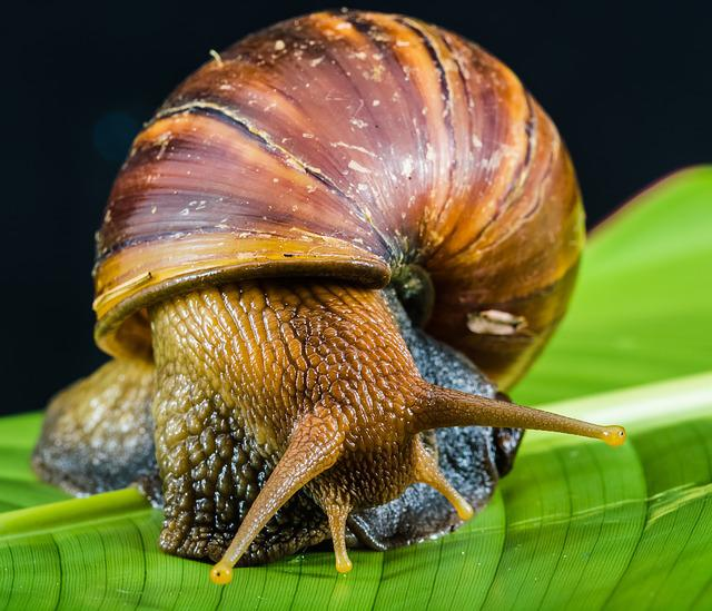 Snail, Slimy, Land Snail, Reptiles, Mollusk