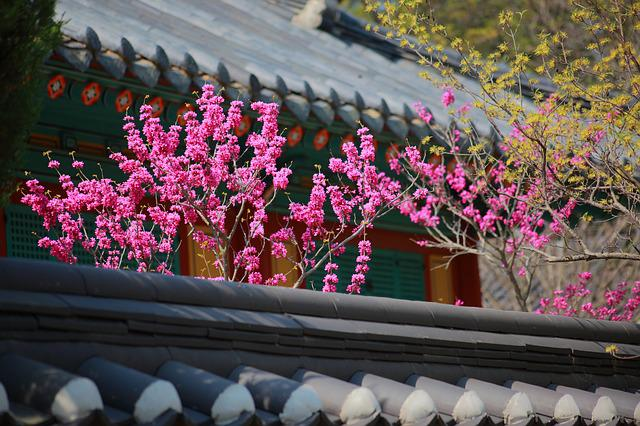 Giwajip, Korean Traditional, Spring, Republic Of Korea