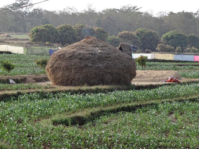 Haystack, Hay, Residue, Crop, Straw, Agriculture, Field