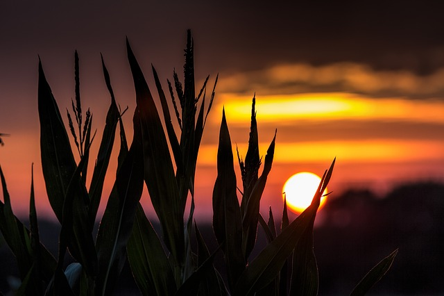 Gelsenkirchen, Resse, Sun, Mood, Back Light, Landscape