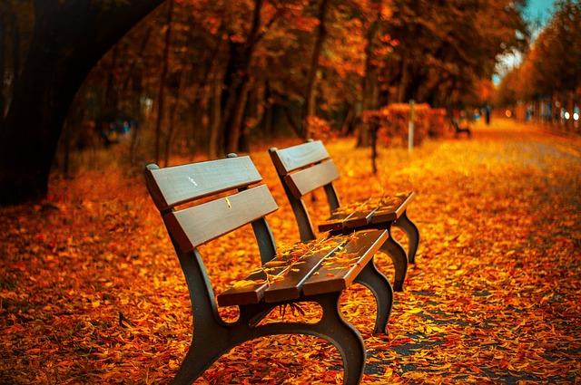 Benches, Autumn, Park, Rest, Sit, Park Bench, Wood