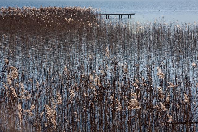 Lake, Bank, Sky, Water, Blue, Rest, Sunny, Landscape
