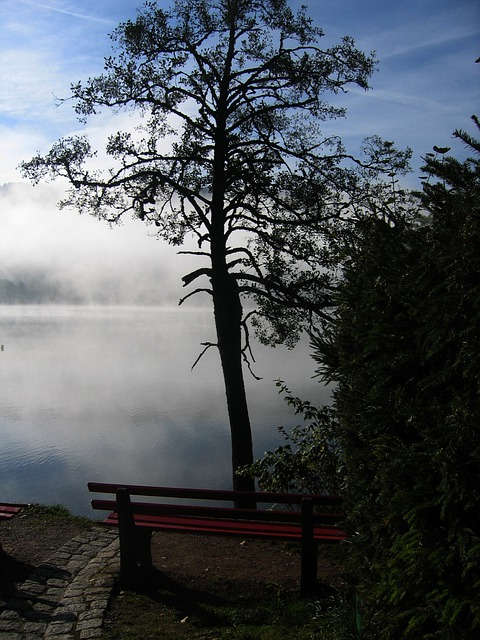 Tree, Bank, Seat, Rest, Seclusion, Black Forest, Lake