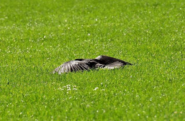 Crow, Sun, Rest, Wing, Spread, Raven Bird, Raven, Black