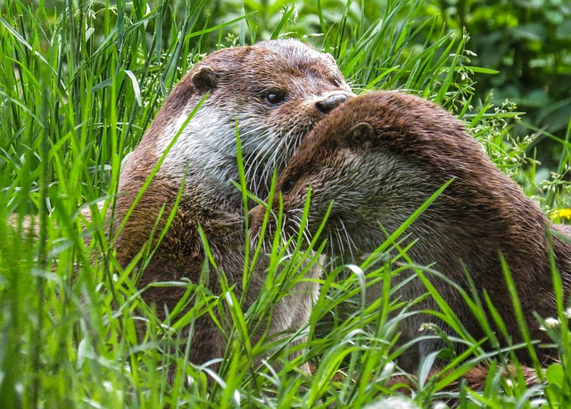 Otter, Animals, Water, Meadow, Care, Rest