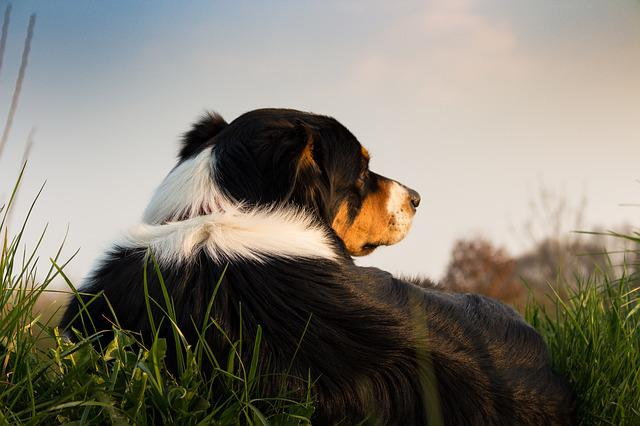 Dog, Concerns, Rest, Animal, Meadow, Pet, Hundeportrait