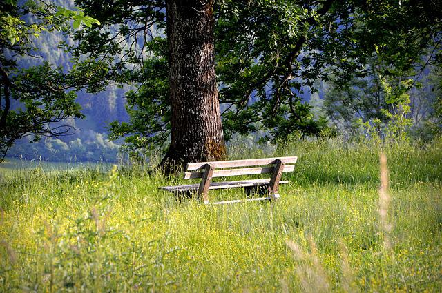 Bank, Bench, Seat, Rest, Nature, Silent, Tree