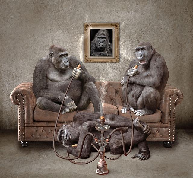 Ape, Hookah, Shisha, Smoking, Relax, Rest