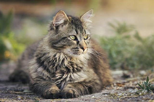 Cat, Animal, Pet, Feline, Resting
