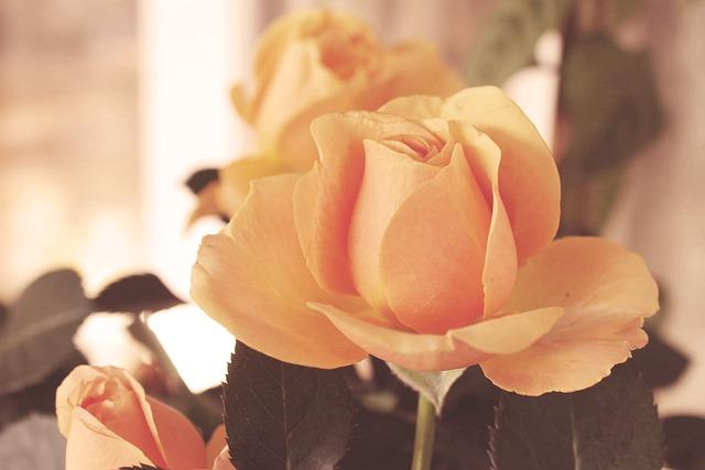 Vintage, Blossom, Bloom, Flowers, Roses, Retro, Shabby