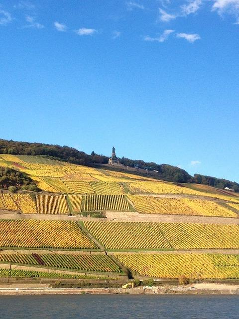 Rhine, Bank, Bingen, Rüdesheim, Forest, Wine