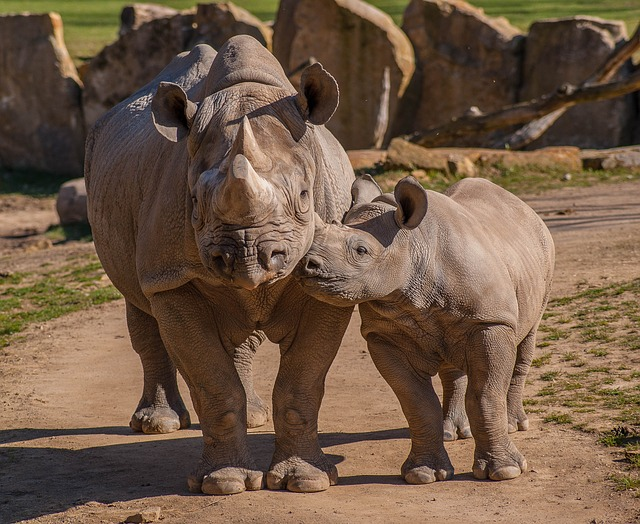 Zoo, Rhino, Animals, Africa
