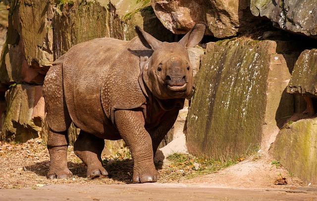 Animals, Wild Animals, Rhino, Panzer, Thick Skin, Horn