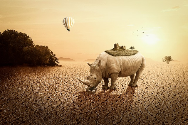 Rhino, Landscape, Mystical, Sunset, Balloon, Castle