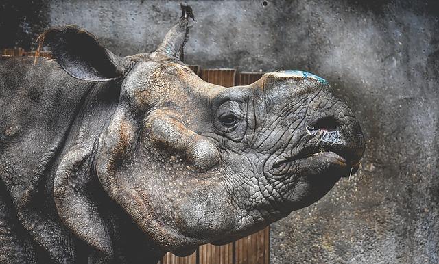 Rhino, Animal, Animal World, Pachyderm, Rhinoceros, Zoo