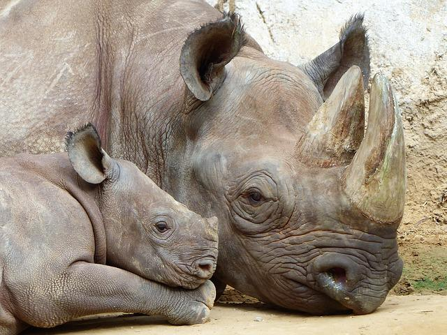 Rhino, Magdeburg, Zoo