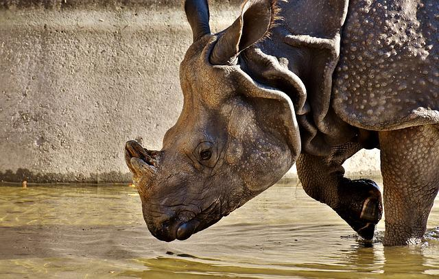 Rhino, Animal, Animal World, Pachyderm, Rhinoceros, Zoo
