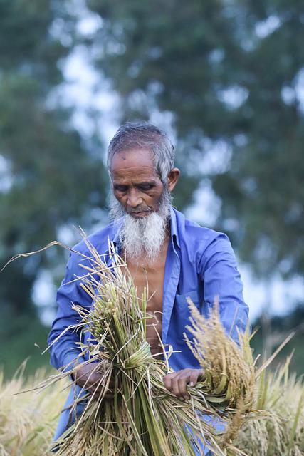 Farmer, Paddy, Nature, Field, Agriculture, Rice, Asia