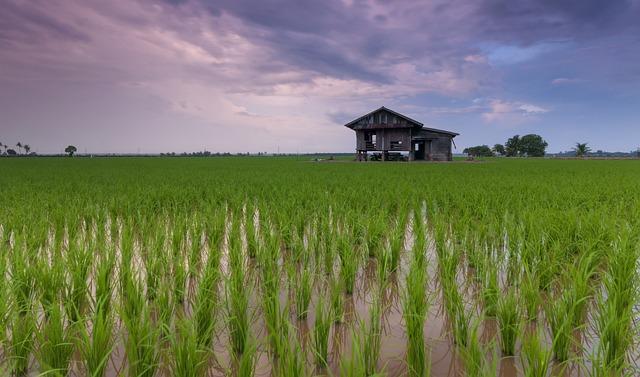 Beautiful, Cottage, Rice Field, Landscape, Vietnam