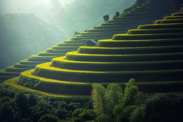 Rice Plantation, Thailand, Rice, Agriculture