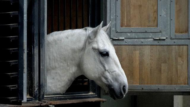 Horse, Lipizzaner, Riding School, Vienna, Animal, Ride