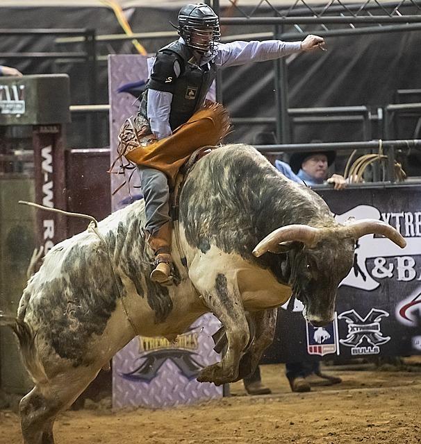 Bull, Bull Riding, Rodeo, Cowboy, Ride, Rider, Sport