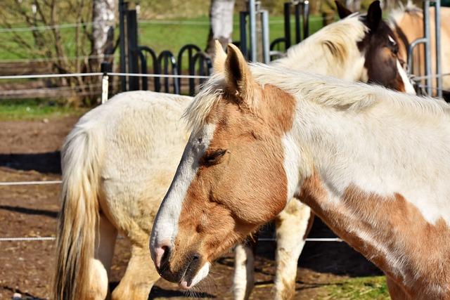 Horse, Horse Head, Pferdeportrait, Reiterhof, Ride