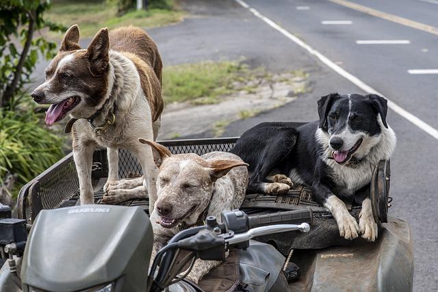 Dogs, Cute, Pets, Animal, Riders, Greetings, Hello