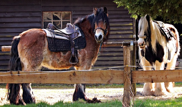 Horses, Rest, Saddle, Ride, Riding, Animal, Mane, Brown