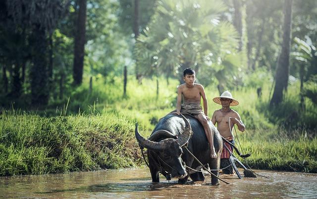 Buffalo, Riding, Agriculture, Asia, Cambodia