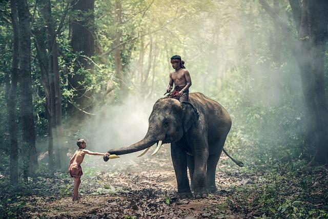 Elephant, Riding, Children, Asia, Cambodia, Cultural