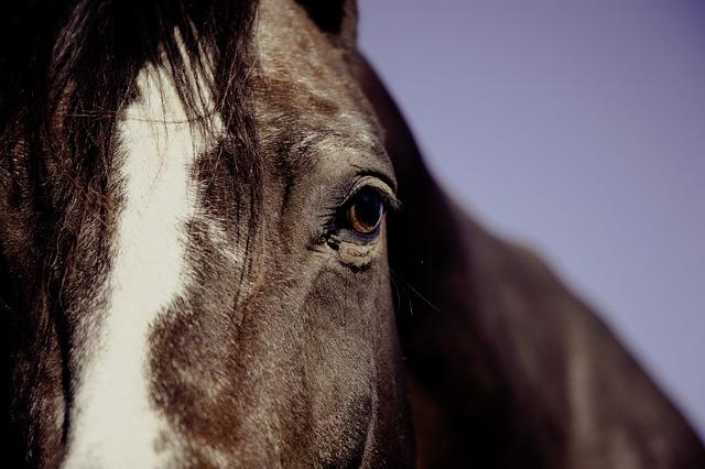 Horse, Ride, Reiter, Equestrian, Animal, Riding, Tail