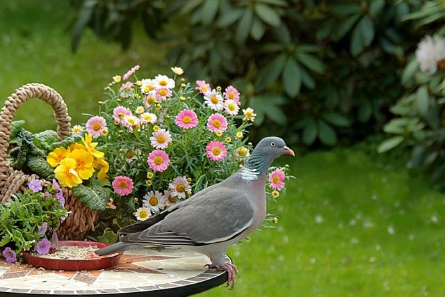 Animal, Bird, Dove, Ringdove, Columba Palumbus