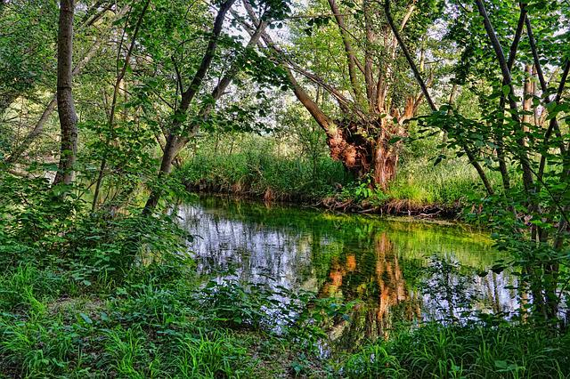 River, Riparian Zone, Trees, Forest, Landscape, Spring